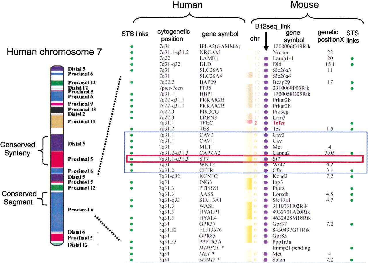Human Chromosome Map