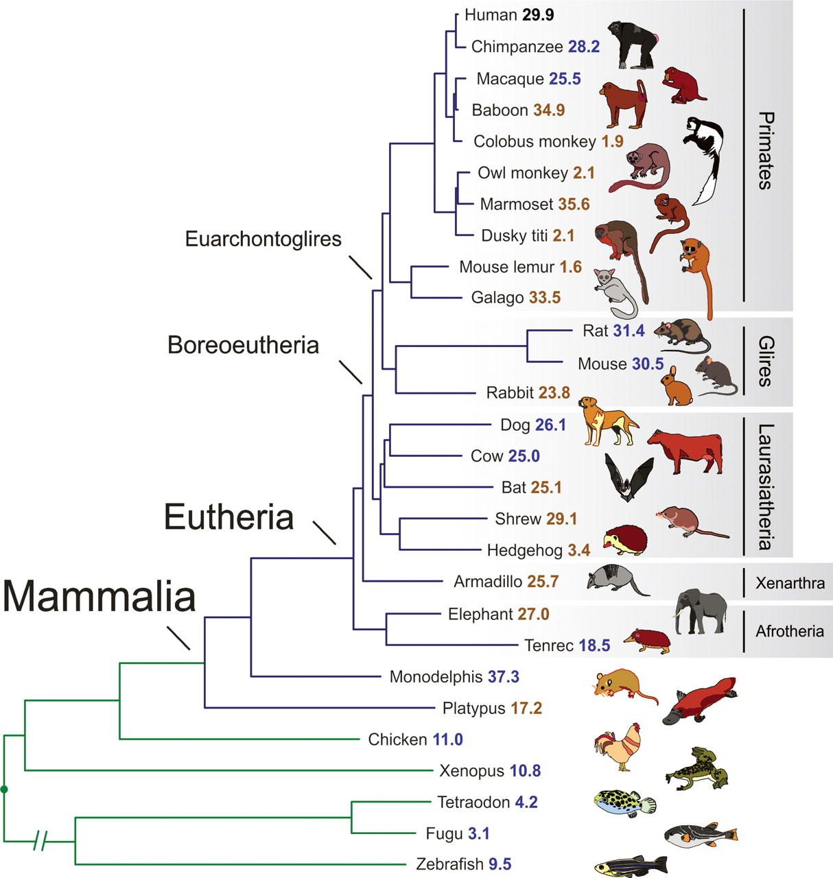 Analyses Of Deep Mammalian Sequence Alignments And Constraint